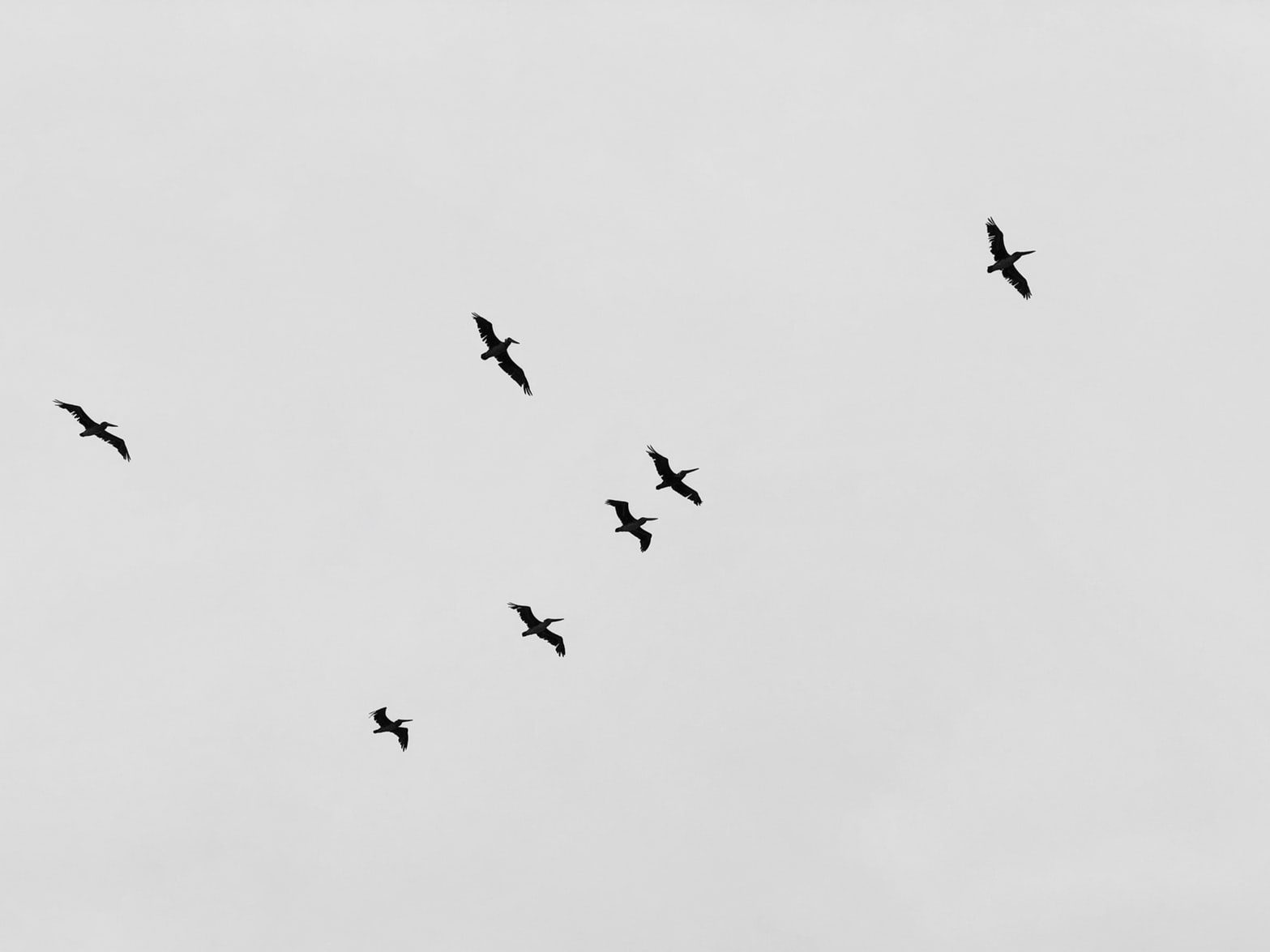 grayscale birds flying in a group