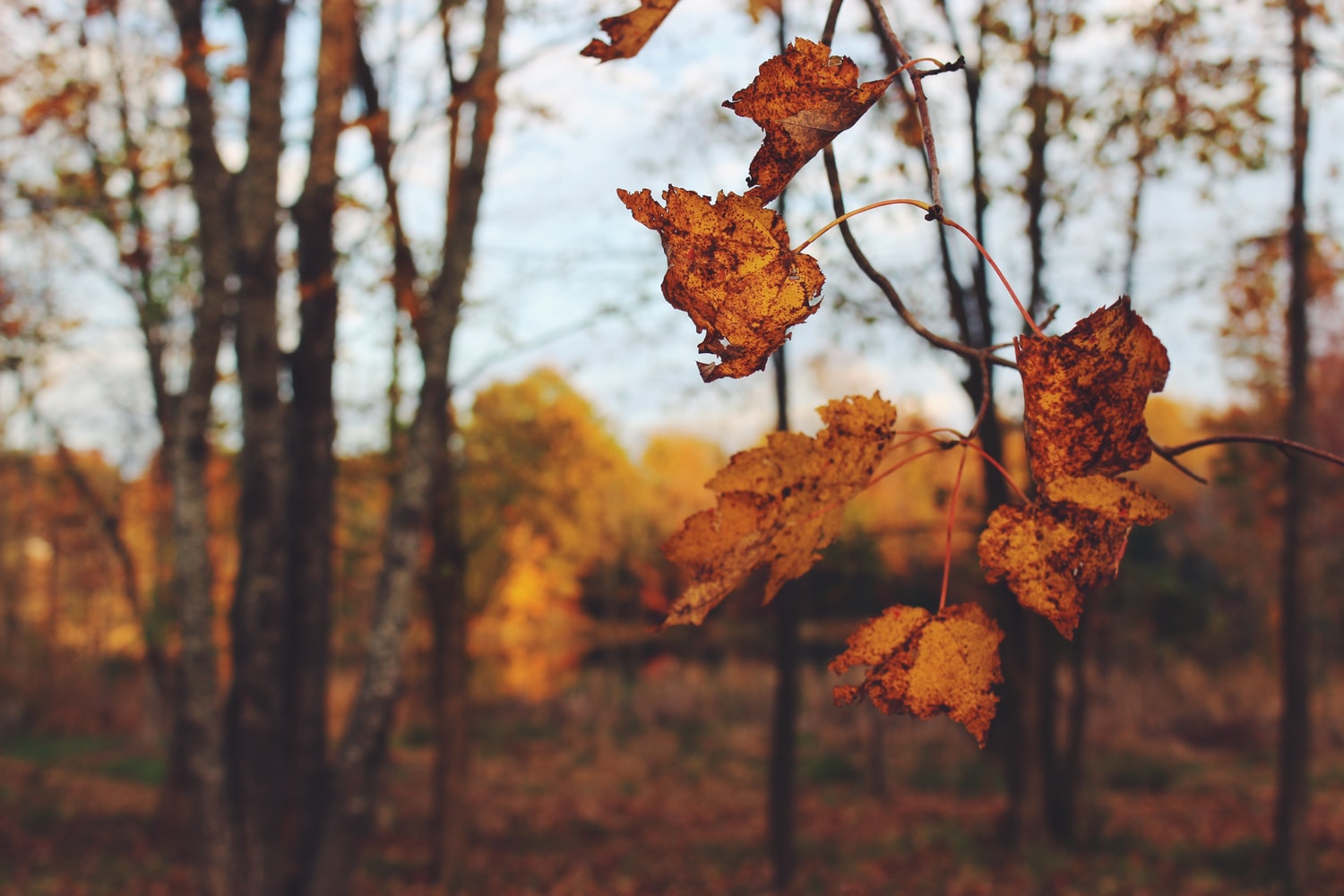 selective focus on leaves outside in forest during fall