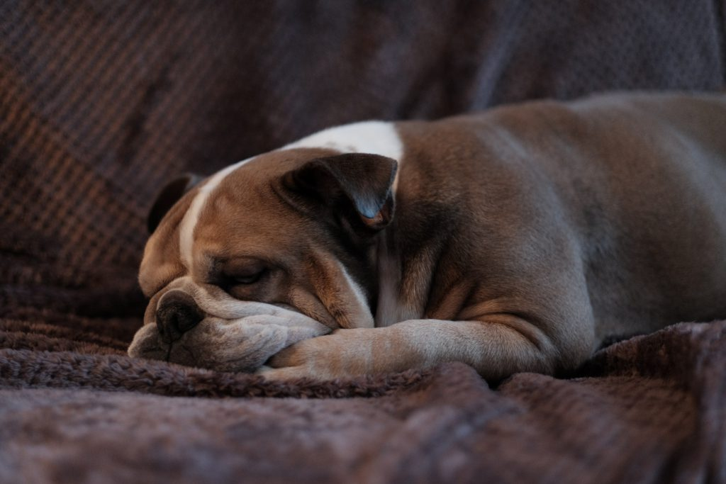 Dog asleep on a couch. Best devotionals for new believers.