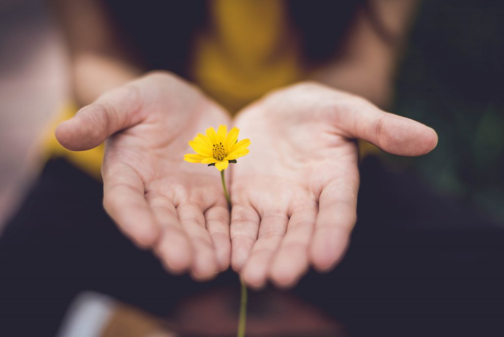Is there anything God is not willing to forgive? A woman's hands lay open with a yellow flower in between them.