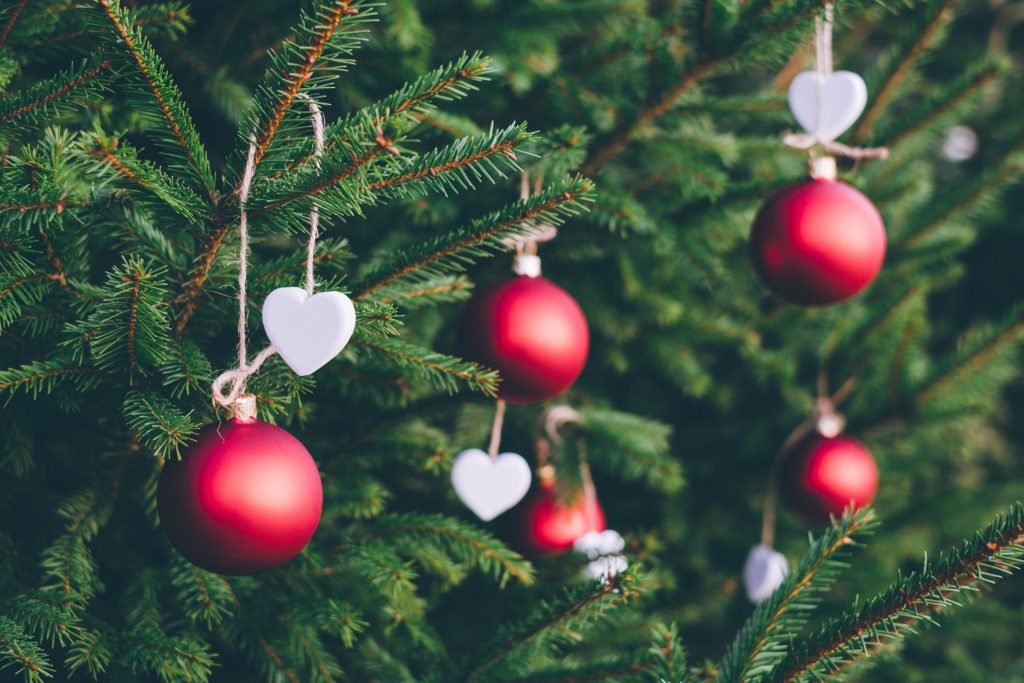 A close up of red and white Christmas decorations on a green Christmas tree. As a new believer, it's okay to hang your regular Christmas decorations.