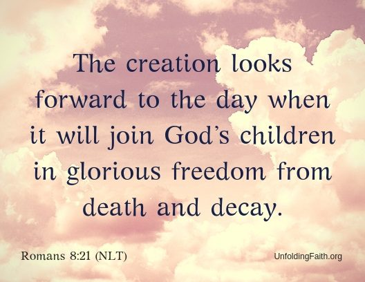 "Scripture about Heaven, Romans 8:21 from the New Living Translation; ""The creation looks forward to the day when it will join God's children in glorious freedom from death and decay."""