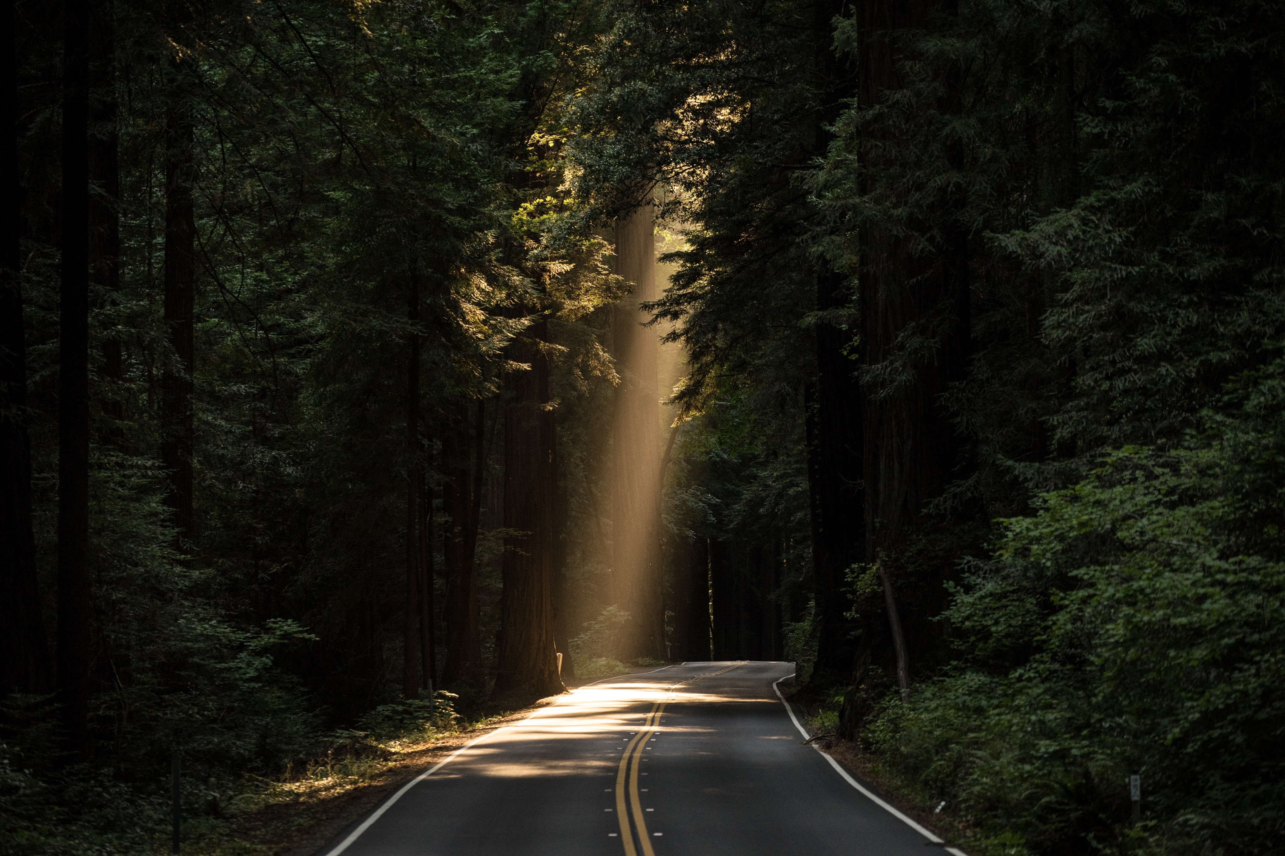 A stream of sunlight pours in through a canopy of trees and illuminates a section of a roadway. God shows up in all the little details of life, He sustains the living and moves the sun, He keeps the road in place and provides the air. We can trust God because He does all this for our good.