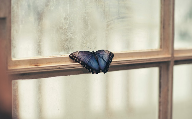 A beautiful blue and black butterfly sits on a window ledge. God offers hope to even the most hopeless-seeming situations.