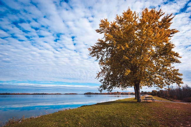 A beautiful large tree is seen on the edge of a lake with a slightly cloudy, blue sky behind it. Is beauty in nature something we can have gratitude about? We can pray to God and thank Him for it!