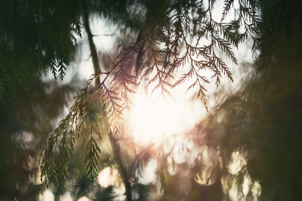 Soft sunlight is seen through the branches of a tree or fern. Lament is defined by author Aubrey Sampson.